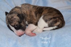3-butler-t